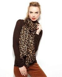 Style&co. Wrap Lurex Leopard Print