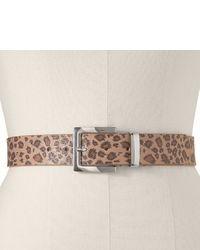 Leopard belt extended size medium 28675